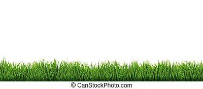 bordo, erba, sfondo bianco, verde