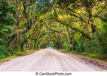 botanica, carolina, sporcizia, albero, lungo, edisto, strada, quercia, baia, isola piantagione, sud