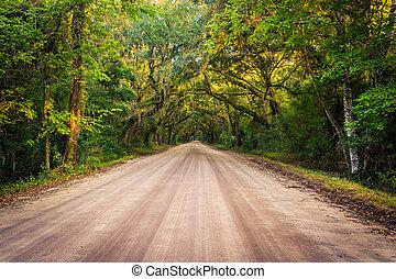 botanica, sporcizia, quercia, albero, baia, piantagione, edisto, lungo, strada