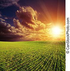 buono, campo, verde, agricolo, tramonto, rosso