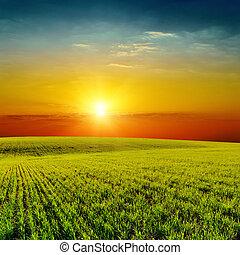 buono, primavera, sopra, campo, verde, arancia, tramonto