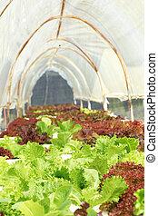 burro, fattoria, testa, verdura, hydroponic