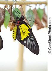 butterfly., nascita