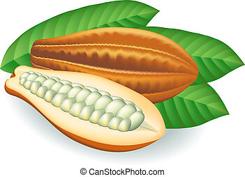 cacao, beans., illustration., vettore