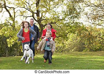 camminare, famiglia, parco, giovane, cane, attraverso, fuori