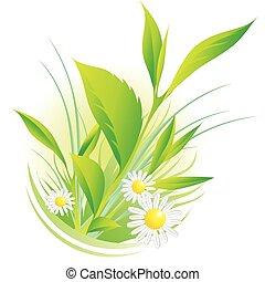camomilla, naturale, piante