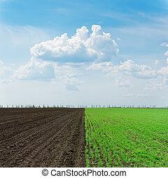 campi, cielo, due, nuvoloso, sotto, agricoltura