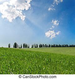 campi, cielo, verde, nuvoloso, sotto