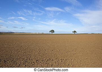 campi, coltivato