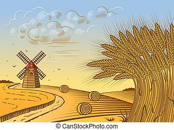 campi, frumento, paesaggio