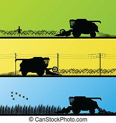 campi, raccolto, vettore, grano, combinare, raccolta
