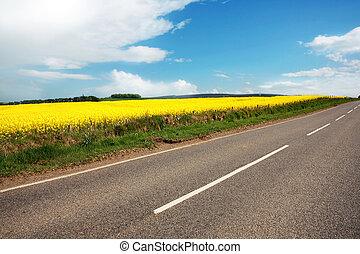 campi, strada, canola, rurale