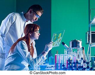 campione, farmaceutico, scienziati, studiare