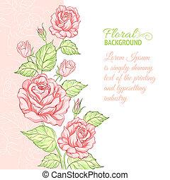 campione, text., silhouette, rosa