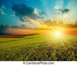campo, agricoltura, buono, verde, tramonto