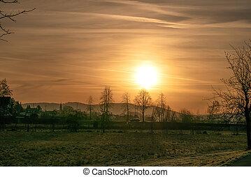 campo, albero, fondo, alba, case