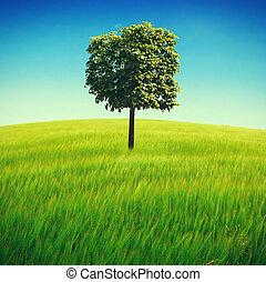 campo, albero verde