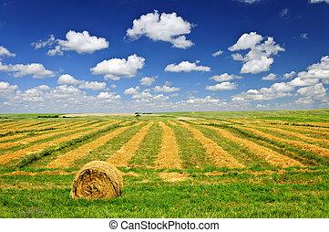 campo azienda agricola, raccolta frumento