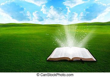 campo, bibbia, erboso