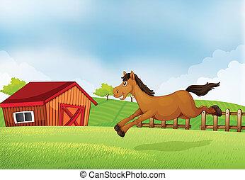 campo, cavallo, correndo