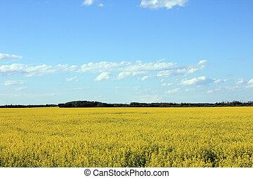 campo, cielo, giallo, sotto