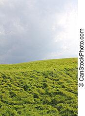 campo, cielo, verde, nuvoloso, sotto