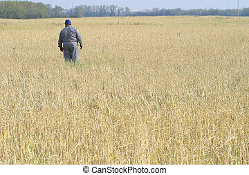 campo, contadino