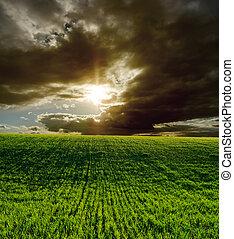 campo, drammatico, verde, tramonto, agricolo