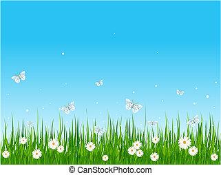 campo, erboso, farfalle