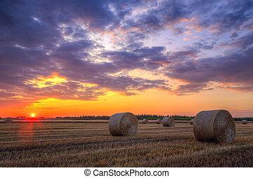 campo, fattoria, sopra, fieno, tramonto, balle