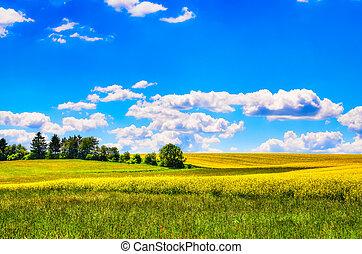 campo, fiori, prato verde, giallo