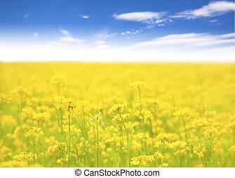 campo, fondo, azzurro cielo, fiore giallo