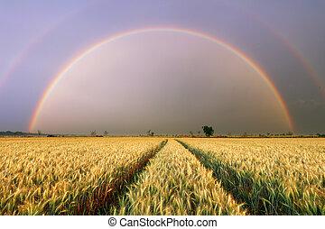 campo frumento, -, agricoltura