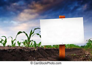 campo, granaglie, segno, agricolo, vuoto