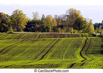 campo, inverno, raccolto