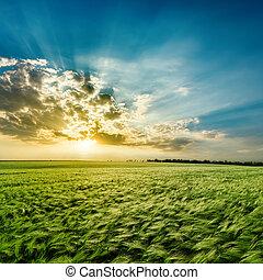 campo, nubi, verde, tramonto, agricolo