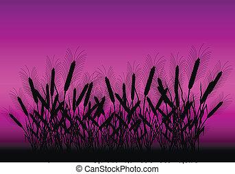 campo, secondo, frumento, tramonto