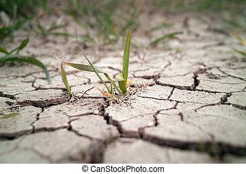 campo, siccità, frumento