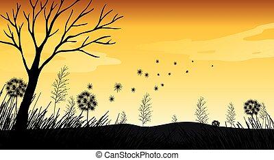campo, silhouette