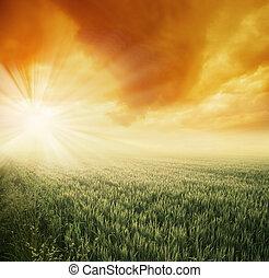 campo, soleggiato, mattina