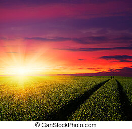 campo, sopra, tramonto