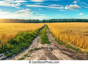 campo, strada, attraverso, frumento