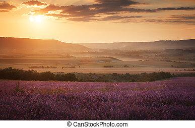 campo, tramonto, lavanda