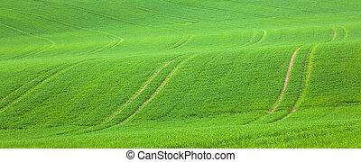 campo, verde, contrassegni