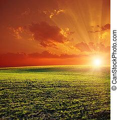 campo, verde, tramonto, rosso, agricolo