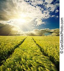 campo, verde, tramonto, strada, sotto