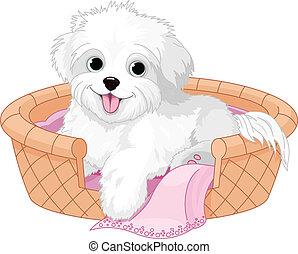 cane bianco, lanuginoso