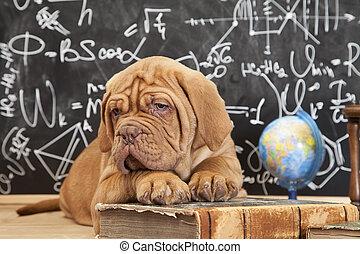 cane, educazione
