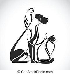 cane, gruppo, gatto, rettile, -, uccello, isolato, vettore, animali domestici, coniglio