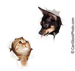 cane, strappato, isolato, gatto, carta, buco, lato